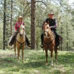 Horses in Prescott Arizona