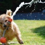Dog Friendly in Prescott, Arizona