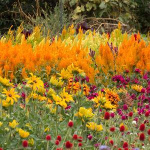 planting flower garden- Julie and Dennis Jennings Real Estate